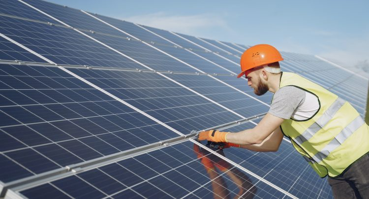 Image for 5 Amazing Tricks to Protect Solar Panels from Birds